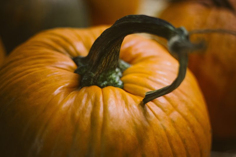 An orange pumpkin with a stalk